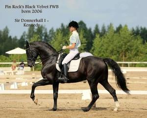 Pin Rock's Black Velvet FWB